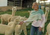 Un-ALPACA-ing the story of Lena Galing